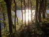 Resplandor sobre laguna Avutardas (Mauro Pesce) Tags: lagunaavutardas villarricatraverse villarrica forest trees green lagoon nature god shining resplandor water rainforest chile hiking lenga bosque arboles