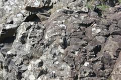 IMG_3607 (avsfan1321) Tags: ireland northernireland countyantrim unitedkingdom uk giantscauseway causewaycoast wildatlanticway basalt rock stone blackbasalt column columnarjointing columnarbasalt ocean atlanticocean landscape