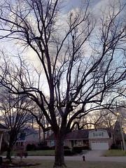 Morning Light January First 2018 (byzantiumbooks) Tags: tree werehere hereios morning 2018