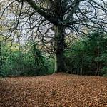 Llwyn Hir forest near Draethen