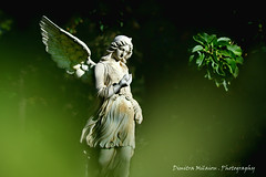 send me an angel... (dimitra_milaiou) Tags: angel nature love art life people poetry music thoughts garden green nikon 7100 d d7100 athens greece bokeh woman dress statue sculpture wings plant tree leaves walking hellas photography photo black day beautiful shot nice lovely white wishes feelings ελλάδα athina city μηλαίου δήμητρα άγαλμα κήποσ female girl portrait she greek world planet earth civilisation culture