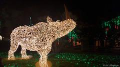 Lo Zoo che Vorrei (The Zoo I'd Want) (Mr. Bamboocha) Tags: 2017 italia italy lozoochevorrei lucidartista lucidartista2017 rhino rhinocerus rinoceronte salerno thezooidwant villacomunale it