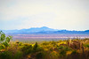 View of distant mountains - Tucson AZ - Digital Painting (randyherring) Tags: az arizona arizonasonoradesertmuseum tucson us bloom cactus color colors desertplants mountains season