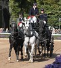 Warendorfer Hengstparade (ow54) Tags: warendorf hengstparade horses hengste pferde carriage gespann vierergespann vierspänner