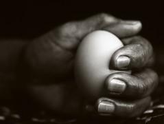 The chicken or the egg ? (Giovanni Savino Photography) Tags: egg hand xrayfilm largeformatphotography plastigmat plastigmatlens oldlens vintagelens fist magneticart ©giovannisavino