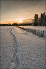 To the sun (Jonas Thomén) Tags: field åker snow snö winter vinter skog forest woods tracks spår trail stig dike ditch moln clouds sun sol sunset solnedgång hdr