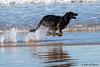 Full speed ahead !!! (JOAO DE BARROS) Tags: joão barros dog animal run