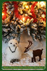 Merry Christmas and a very happy New Year! (elsa11) Tags: christmas merrychristmas happynewyear xmas kerstmis harrypotter hedwigtheowl christmastree rendeer snowowl rendier kerst camera