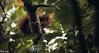 Sur son arbre perché (N-Lock) Tags: nell photographe rueil malmaison rambouillet yvelines paris france écureuil roux rousse animal animalis animaux bete nlock canon 760d tamron 150mm 600mm sauvage arbre vert feuille noisette noix nature foret