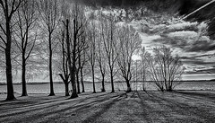 Winters day by the lake (David Feuerhelm) Tags: trees water sky cloud clouds lake sun rutland rutlandwater nikkor blackandwhite monochrome bw noiretblanc schwarzundweiss contrast england landscape nikon d750 nikkor1635mmf4 wideangle silverefex