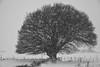 L'Aubrac l'hiver (Michel Seguret Thanks for 11,6 M views !!!) Tags: france nature natur natura massifcentral froid cold frio kalt saison season winter inverno invierno neige snow neve schnee michelseguret nikon d pro