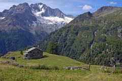 Estate all'Alpe  dell'Oro di fronte al Monte Disgrazia (3.678 m) (giorgiorodano46) Tags: luglio2015 july 2015 giorgiorodano nikon italy valmalenco valtellina lombardia alpedelloro montedisgrazia alpi alpes alpen alps summer estate