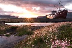 Flower Path (Fabian Fortmann) Tags: patreksfjörður wreck wrack icleand island sunset sunrise sonnenuntergang westfjords nature landscape