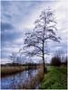 Morning Tree (Ingmar Vermolen) Tags: morning light birch