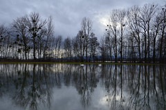 Les cygnes  -  Swans (Philippe Haumesser Photographies (+ 5000 000 views) Tags: arbres sky nuages clouds water reflets reflections cygnes alsace elsass france hautrhin 68 nikond7000 nikon d7000 reflex 2018 inondations floods swans