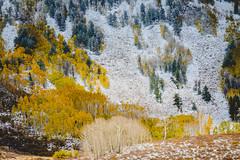 La Sal Mountains (bumeister1) Tags: lasalloop lasalmountains utahtrip2017 warnerlake aspens utah nikon landscape fall autumn