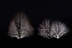 DSC01907 (simonbalk523) Tags: trees night light dark sony