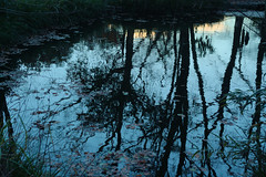 Pond in Winter (Slivovice) Tags: winter leaves sky woods nikkor ais