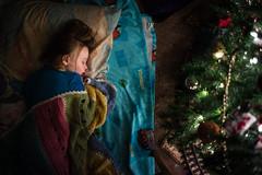 352| 365 (trois petits oiseaux) Tags: 365 christmas tree lights lowlight childhood kids