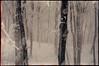 563 (konophotography) Tags: konophotography konophoto filmisnotdead film filmphotography analog analogue 35mm nature snow winter georgia buyfilmnotmegapixels ishootfilm 2016