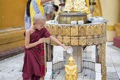 SYS_8737 (Daegeon Shin) Tags: nikon d750 50mmf18 nikkor afs50mmf18g monk buddhism buddhist budismo budista myanmar burma boy 니콘 니콘렌즈 미얀마 불교 중 스님 동자승 monje