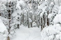 Kinsmann Ridge Trail, NH (Andrew P ( the_aberrant)) Tags: canon canonshoot canonusa cannonmountain canon70d whitemountians wildernessculture newengland outdoors neverstopexploring nature newhampshire snow sigma