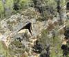 "Pliegue monoclinal o en rodilla (Monocline), con despegue - Río Borosa (Jaén, España) - 01 (Banco de Imágenes Geológicas) Tags: ""geology imagesearth science imagesimage bank ""ciencias de la tierra"" geologi geología geológia geologie géologie geologija ġeoloġija ģeoloģija geology geoloogia gjeologji heolohiya jarðfræði jeoloji jiologia xeoloxía γεωλογία геалогія геология геологія daeareg địachất geolaíocht גאולוגיה געאָלאָגי "" جيولوجيا زمین شناسی ธรณีวิทยา 地質 地質学 pliegue plegamiento folding fold plissement pli piega plooi falte dobra tectónica tectonics ""geología estructural"" ""structural geology"" tectonique tectonische tettonica"