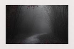 Woodland Path (hall1705) Tags: woodlandpath houghtonwoods woods mist misty path trees nature nikon1j5 outdoor arundel westsussex