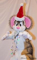 _DSC1286 (Acrufox) Tags: midwest furfest 2017 furry convention december hyatt regency ohare rosemont chicago illinois acrufox fursuit fursuiting mff2017 menagerie fursuitsaturday