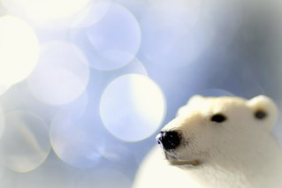 My shiny nose knows: It's Christmas