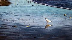 Flic floc (virginiefort) Tags: afs241204ged d600 atlantique beach bird bleu blue gull mer mouette nikon ocean oiseau plage reflection reflet sea seagull