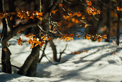 so comes snow after fire(works) I (culuthilwen) Tags: sonyalpha230 helios44m6 vintagelens sonysti 58mm f2 m42 winter foliage forest leaves snow light bokeh nature dof blurry orange white helios44m