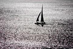 Qual buon vento (meghimeg) Tags: 2018 rapallo barca boat vela sail mare sea monocrome monocromo bianconero blackwhite
