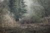 Abandoned (aveyardphotography) Tags: old shed gardener scrub vegetation wooden nature hidden trees undergrowth bracken wild yorkshire howardian hills leaning engulf engulfing abandoned