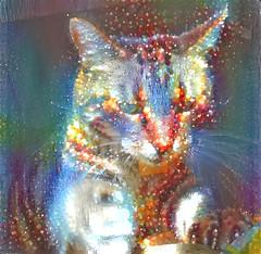 Tigger in the Holiday Mood (sjrankin) Tags: 10december2017 edited animal cat hdr closeup tigger sun sunlight sunbeam kitchen processed filtered holiday christmas yubari hokkaido japan