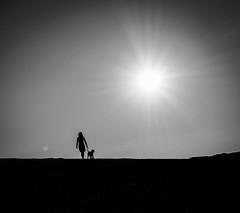 dog walking (Dan-Schneider) Tags: light silhouette sun contrejour dog blackandwhite bw monochrome minimalism streetphotography schwarzweiss street sky