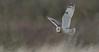 Short-eared Owl (KHR Images) Tags: shortearedowl seo short eared owl asioflammeus wild bird birdofprey hunting inflight flying burwellfen cambridgeshire eastanglia nikon d500 kevinrobson khrimages