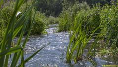 Жизнь как вода течет и утекает..