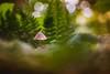 Merry Christmas Y'all! :) (Joe Effendi (Always Late!)) Tags: effendi fujifilm fuji xt10 nature natuur paddestoel mushroom fungi outdoor depthoffield dof bokeh tessar50mmf28 50mm manuallens vintagelens m42 christmas classicchrome closeup macro czjtessar50mmf28