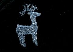 A Reindeer got lost in our neighbours garden (Andy von der Wurm) Tags: rentier reindeer dekoration decoration xmas christmas weihnachten weihnachtsdeko illuminated beleuchtet illuminiert nachtaufnahme nightshot andyvonderwurm andreasfucke hobbyphotograph outddoor garden garten