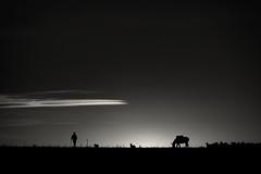 El tiempo detenido (una cierta mirada) Tags: landscape outdoors donkey silhouettes sunset sun sky clouds bnw blackandwhite nature animals