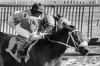 "2017-12-11 Laurel Park (JLeeFleenor) Tags: photos photography md marylandracing maryland marylandhorseracing jockey جُوكِي ""赛马骑师"" jinete ""競馬騎手"" dżokej jocheu คนขี่ม้าแข่ง jóquei žokej kilparatsastaja rennreiter fantino ""경마 기수"" жокей jokey người horses thoroughbreds equine equestrian cheval cavalo cavallo cavall caballo pferd paard perd hevonen hest hestur cal kon konj beygir capall ceffyl cuddy yarraman faras alogo soos kuda uma pfeerd koin حصان кон 马 häst άλογο סוס घोड़ा 馬 koń лошадь laurelpark westonhamilton"