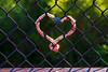 <3 fence (johngpt) Tags: fujifilmxt1 alameda fujinonxf55200mmf3548rlmois lock topazadjust bosque places fence ~~fencefriday~~ hff