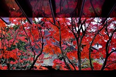 続紅葉シリーズ-Autumn reflections (Giovanni88Ant) Tags: byodointemple uji kyoto worldheritage 平等院