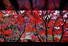 続紅葉シリーズ-Autumn reflections (Giovanni88Ant) Tags: byodointemple uji kyoto worldheritage 平等院