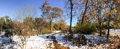 IMG_5440.jpg (proximity2nature) Tags: olmstedlinearpark snow atlanta georgia unitedstates us