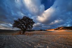 La luz de la tarde (Anpegom fotografía) Tags: roble valle luces atardecer crepúsculo nubes valledelesgueva valladolid