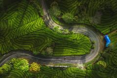 Indonesia - Ciwidey Tea Plantations