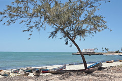 What A Peaceful Island (The Spirit of the World ( On and Off)) Tags: island boats dhows chapel trees palmtrees landscape beach sand whitesand leisure calm peaceful scene ilhademocambique mozambique seascape indianocean ocean africa eastafrica