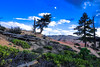 Celestial Grounds (VALV!DAL) Tags: brycecanyon brycecanyonnationalpark redrock wood treetrunk trunk fantasy landscapesphotography pines pinetree bluesky clouds plants utah southernutah southusa usa united nationalpark usnationalparks photographie photographer olympusem5markii boxwood